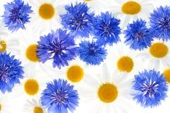 Modelo floral Fotos de archivo libres de regalías