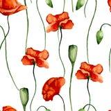 Modelo floral Amapolas Fotografía de archivo