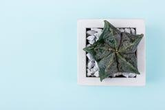 Modelo floral del inconformista sobre fondo de madera del vintage rústico Su Imagenes de archivo