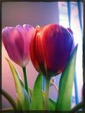 Modelo floral (inconsútil) fotografía de archivo libre de regalías