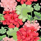 Modelo floral inconsútil del vector Foto de archivo