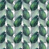 Modelo floral maravilloso tropical herbario verde claro del verano de Hawaii de una acuarela de las hojas de palma del monstera d Foto de archivo libre de regalías
