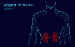 Modelo geométrico poli interno da silhueta 3d dos homens do órgão dos rins baixo Tratamento da medicina do sistema da urologia Ci ilustração royalty free