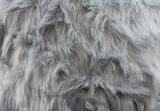 Modelo gris de la piel Fotografía de archivo