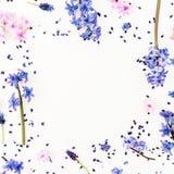 Modelo hecho de flores y de p?talos azules o rosados en el fondo blanco Endecha plana fotos de archivo libres de regalías