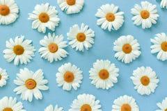Modelo hecho de las flores blancas de la manzanilla imagen de archivo