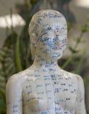 Modelo-Hembra de la acupuntura Foto de archivo libre de regalías