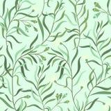 Modelo herbario stock de ilustración
