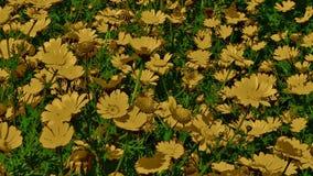 Modelo hermoso de flores del color de oro ilustración del vector