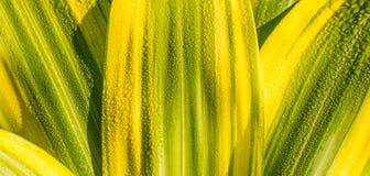 Modelo hermoso de hojas Foto de archivo