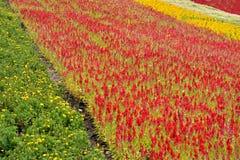 Modelo hermoso del campo de flor Fotografía de archivo
