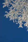 Modelo hermoso del invierno de la nieve Imagenes de archivo