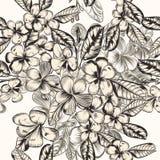 Modelo hermoso del vector con las flores tropicales dibujadas mano en vin Foto de archivo libre de regalías