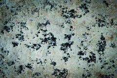 Modelo hermoso en la textura de mármol blanca del piso Fotos de archivo libres de regalías