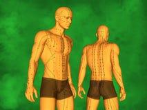 Modelo humano da acupuntura Imagem de Stock Royalty Free
