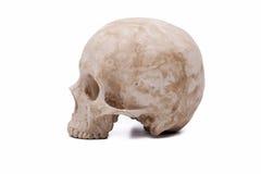 Modelo humano del cráneo Fotos de archivo libres de regalías