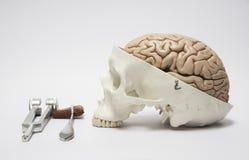 Modelo humano del cráneo y equpments médicos Fotografía de archivo libre de regalías