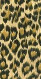 Modelo I de la piel del leopardo Fotografía de archivo