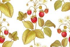 Modelo inconsútil botánico con la fresa Imagen de archivo