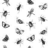 Modelo inconsútil brillante del verano con las mariposas, los escarabajos, los caracoles y las libélulas ilustración del vector