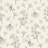 Modelo inconsútil con biloba del ginkgo fondo médico, botánico de la planta Textura dibujada mano del bosquejo del vector Foto de archivo libre de regalías