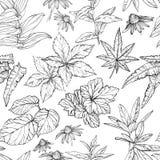 Modelo incons?til con bosquejo de las ramas y de las hojas libre illustration