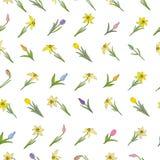 Modelo inconsútil con diversas flores de la primavera Tulipanes y narcisos Objetos aislados en un fondo blanco fotografía de archivo libre de regalías