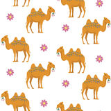 Modelo inconsútil con el camello Foto de archivo libre de regalías