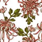 Modelo inconsútil con el crisantemo japonés coloreado exhausto de la mano stock de ilustración