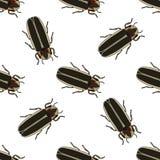 Modelo inconsútil con el Lampyridae del escarabajo de la luciérnaga pyralis del photinus luciérnaga Vector Fotos de archivo libres de regalías