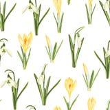 Modelo inconsútil con el snowdrop blanco y hojas amarillas del flor del azafrán y verdes en un fondo blanco stock de ilustración