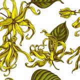 Modelo inconsútil con el ylang-ylang coloreado exhausto de la mano stock de ilustración