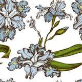Modelo inconsútil con japonica coloreado exhausto del iris de la mano libre illustration