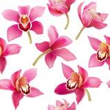 Modelo inconsútil con la orquídea Foto de archivo libre de regalías