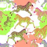 Modelo inconsútil con las cebras Foto de archivo libre de regalías