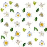 Modelo inconsútil con las flores blancas y las hojas del verde Fotos de archivo libres de regalías