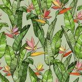 Modelo inconsútil con las flores de la ave del paraíso del Strelitzia ilustración del vector