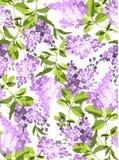 Modelo inconsútil con las flores de la lila libre illustration