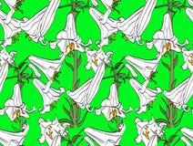 Modelo inconsútil con las flores del lirio Tema botánico hermoso imagen de archivo