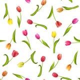 Modelo inconsútil con las flores en un fondo blanco Ejemplo de la acuarela de tulipanes rojos Fotografía de archivo