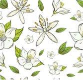 Modelo inconsútil con las flores y las hojas del limón fotos de archivo libres de regalías