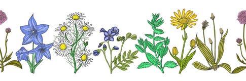 Modelo inconsútil con las hierbas medicinales dibujadas mano de la tinta Fotos de archivo