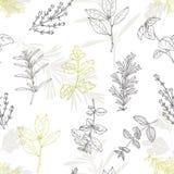 Modelo inconsútil con las hierbas picantes dibujadas mano Fondo culinario de la cocina stock de ilustración