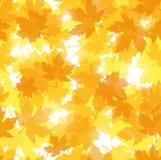 Modelo inconsútil con las hojas de arce del otoño. ilustración del vector