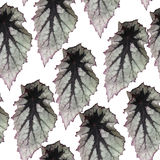 Modelo inconsútil con las hojas de la planta Imagen de archivo