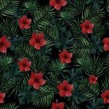 Modelo inconsútil con las hojas de palma, las hojas del monstera y las flores rojas del hibisco en un fondo negro Ilustraci?n de  stock de ilustración