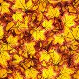 Modelo inconsútil con las hojas del amarillo del otoño Imagenes de archivo