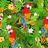 Modelo inconsútil con las hojas, las flores y vector tropicales exóticos del loro ilustración del vector