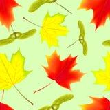 Modelo inconsútil con las hojas que caen del arce del otoño Imágenes de archivo libres de regalías