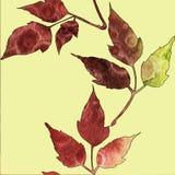 Modelo incons?til con las hojas rojas y verdes de la acuarela stock de ilustración